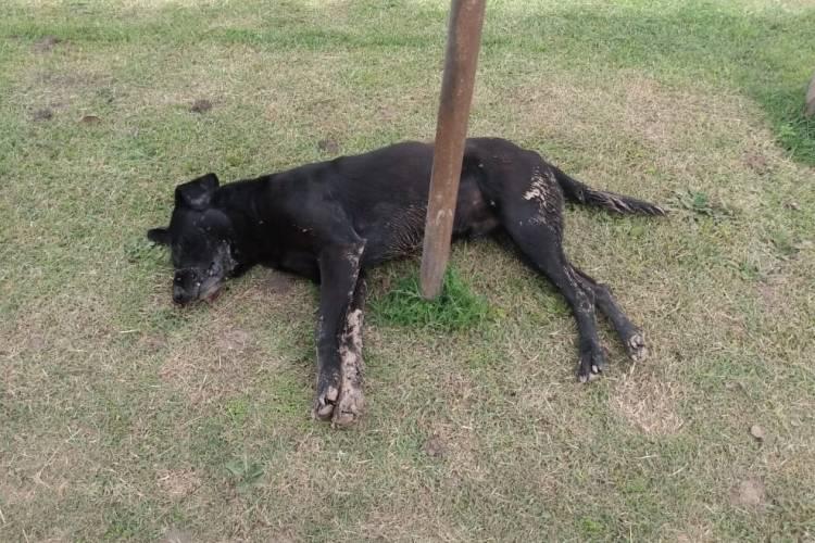 Envenenamiento de perros: el Municipio se presenta como denunciante