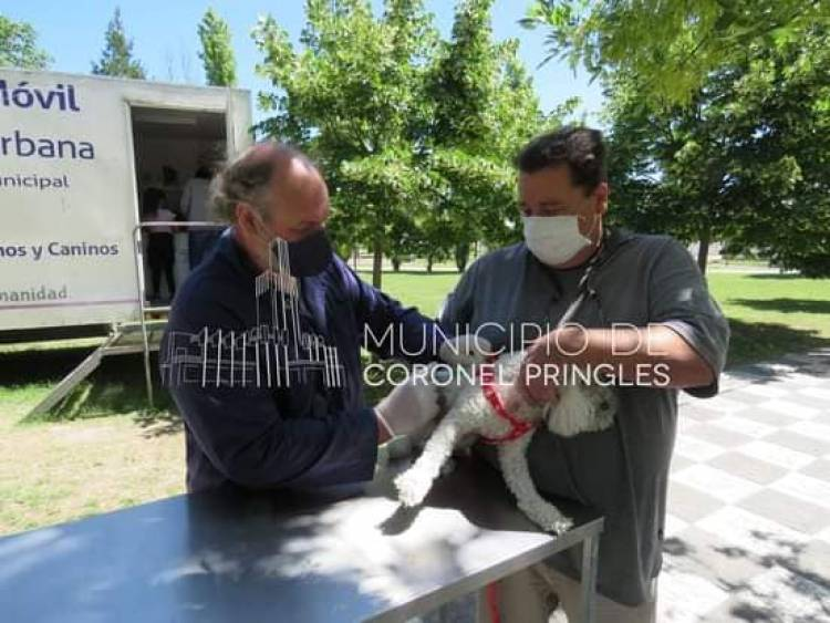 Nueva campaña de vacunación antirrábica masiva para perros y gatos